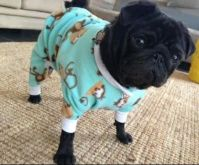 Dog pug clothes oncey MADE TO ORDER on Etsy, $27.51 ...