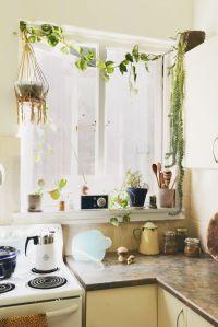 17 Best ideas about Kitchen Plants on Pinterest   Kitchen ...