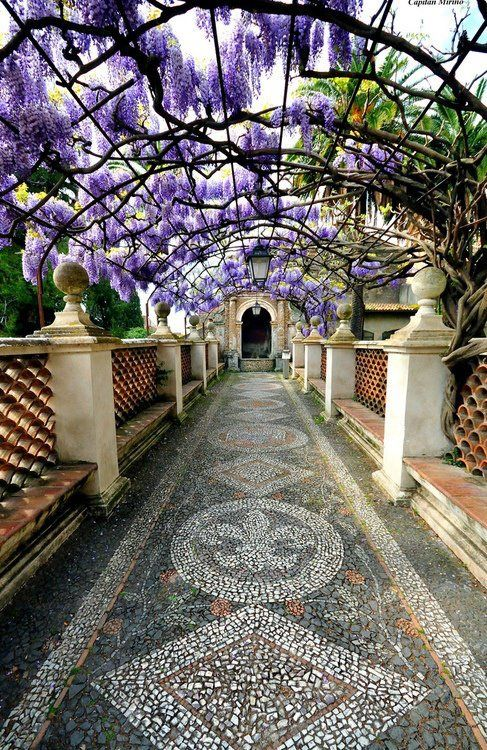 Tivoli Gardens Rome Pictures 17 Best Images About Wisteria On Pinterest | Paper