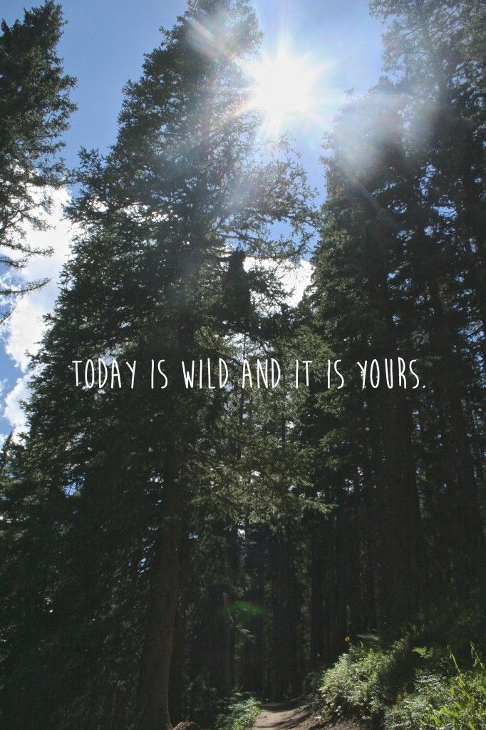Forest Motivation Quote Wallpaper Phone Best 25 Outdoors Quotes Ideas On Pinterest
