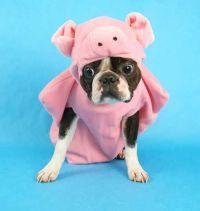 20 best Pig Hat images on Pinterest