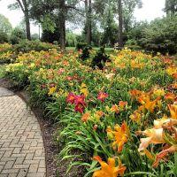 25+ best ideas about Daylily garden on Pinterest   Sun ...