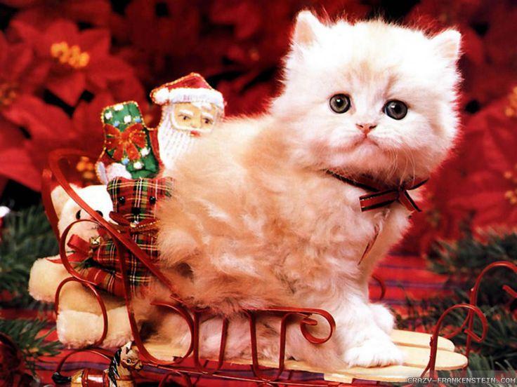 Cute Baby Pets Live Wallpaper Download Download Cute Christmas Cat Wallpaper Full Hd Wallpapers