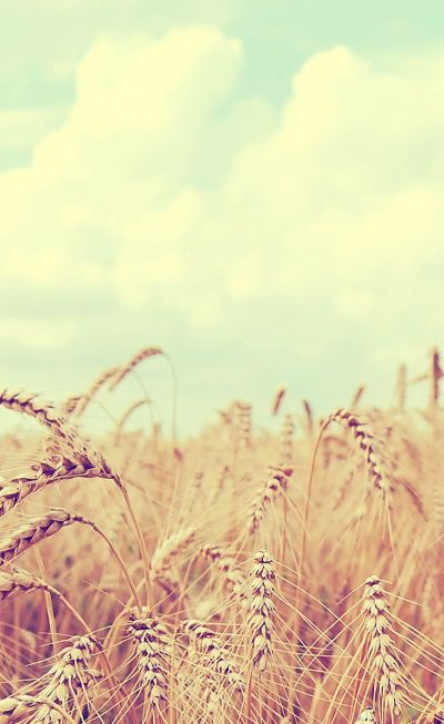 Wheat Grass iPhone #lomo wallpaper - mobile9.com | iPhone 6 & iPhone 6 Plus Wallpapers, Cases ...