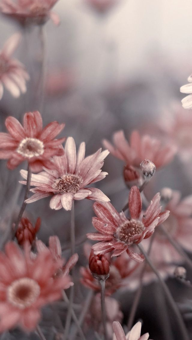3d Live Wallpaper For Android Tablet Free Download Download Phone Wallpapers Flowers Gallery