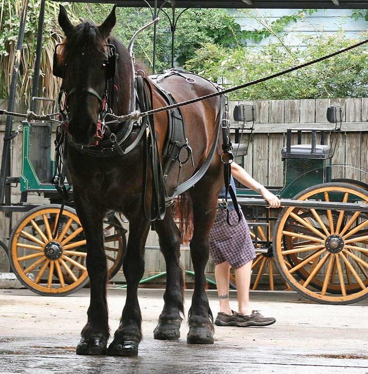 pony charleston