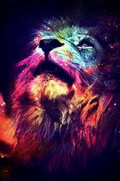 iPhone background   Amazing animals 驚くべき動物   Pinterest   Beautiful, iPhone backgrounds and Awesome