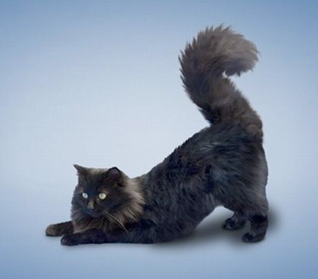 Cute Wallpapers For Phones For Free Downward Dog Cat Yoga Cats I Heart This Pinterest