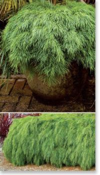 Best 20+ Australian Garden ideas on Pinterest | Australian ...