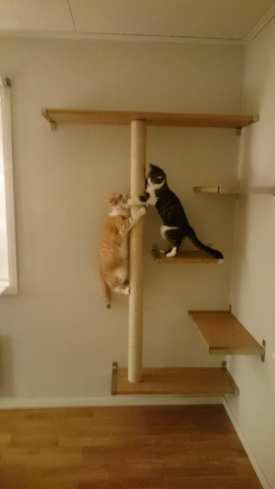 570 Best Images About Cat O Kitten On Pinterest