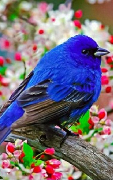 Free Computer Fall Wallpaper Very Bright Blue Bird Of Happiness Ccp Blue