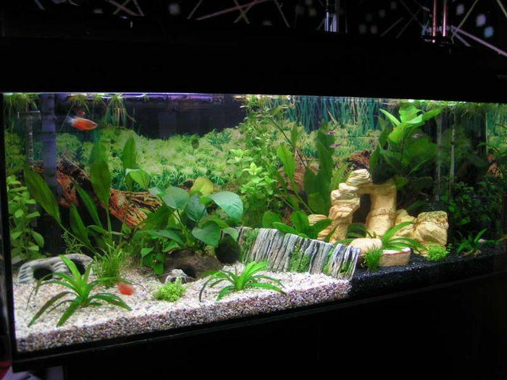 freshwater aquarium aquascape design ideas