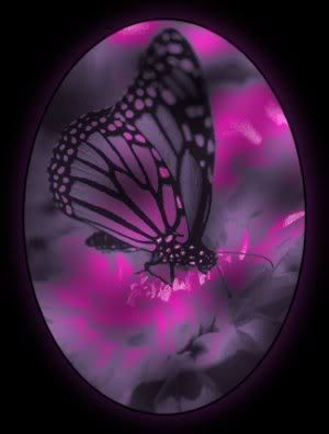 Stud Quotes Wallpapers 15 Must See Purple Butterfly Pins Butterflies Beautiful