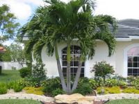 Best 25+ Palm trees landscaping ideas on Pinterest