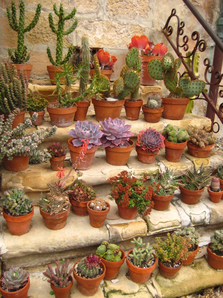 1000+ Images About Cactus Patio On Pinterest | Gardens, Patio And