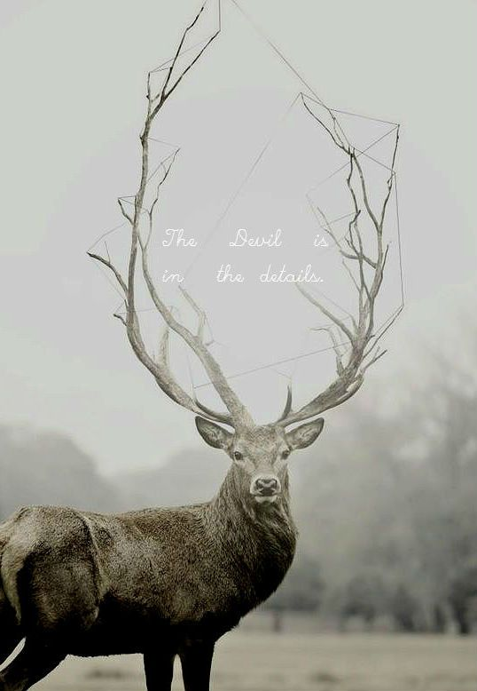 Flirty Quotes Wallpaper Stag Hannibal Reference Quote ☮ Wendigo ☮ Pinterest
