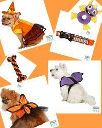 petsmart cat halloween costumes