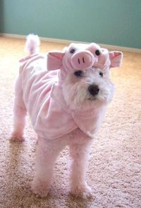 60 best images about Piggy Wanna Be! on Pinterest