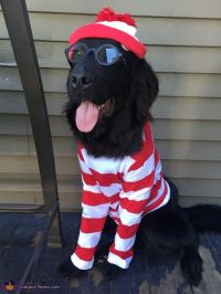 Where's Waldo? Dog's Costume | Wheres waldo, Halloween ...