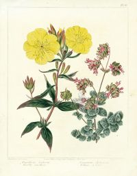 1000+ images about  on Pinterest   Botanical drawings ...