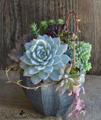 176 best images about Succulents on Pinterest | Gardens ...