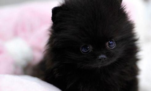 Fall Kitten Wallpaper Teacup Pomeranian Puppy Cute Pinterest Cats We And