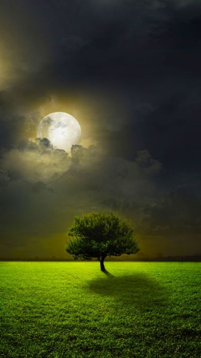 TAP AND GET THE FREE APP! Art Creative Nature Green Trees Sun Clouds Sky HD iPhone 6 Wallpaper ...