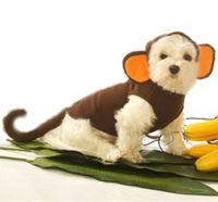 59 best images about Dog Halloween Costumes on Pinterest ...