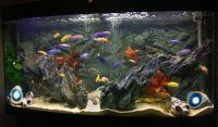 malawi cichlid tank | Fish tank ideas | Pinterest | Malawi ...