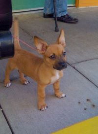 Scrappy doo's real:) | I'm such a Fan! | Pinterest | Animal