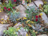 Succulent rock garden | garden ideas | Pinterest | Gardens ...