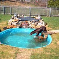 Best 20+ Dog swimming pools ideas on Pinterest | Diy dog ...