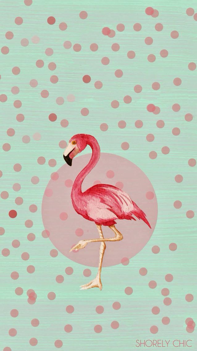 Cute Wallpaper Phone Case 78 Images About Fancy Flamingos ★ Iphone Wallpapers On