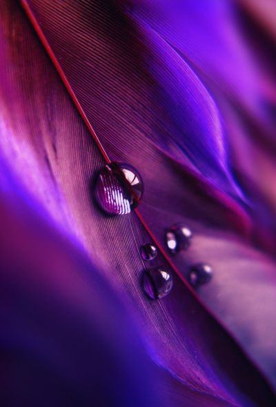 1000+ images about PURPLE on Pinterest   Purple dress, Violets and Purple glass
