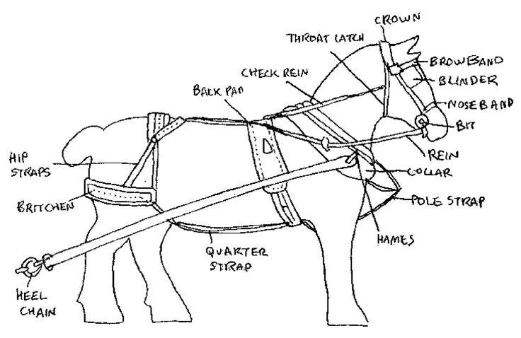harness diagram horse