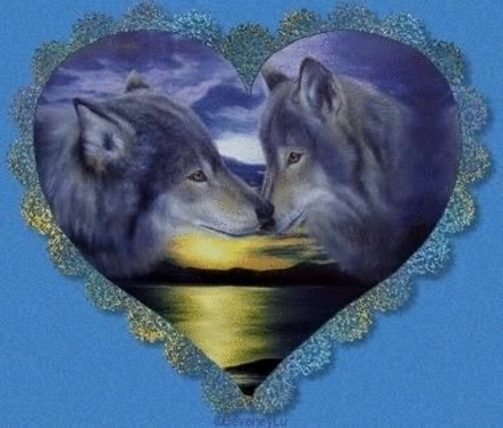 Poets Of The Fall Wallpaper 27 Best Images About Native American On Pinterest Wolves