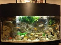 72 Gallon Bow Front Mixed Malawi Peacock Cichlid Aquarium ...