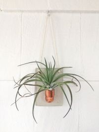 25+ best ideas about Hanging Air Plants on Pinterest ...
