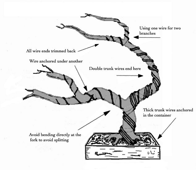 wiring pine bonsai