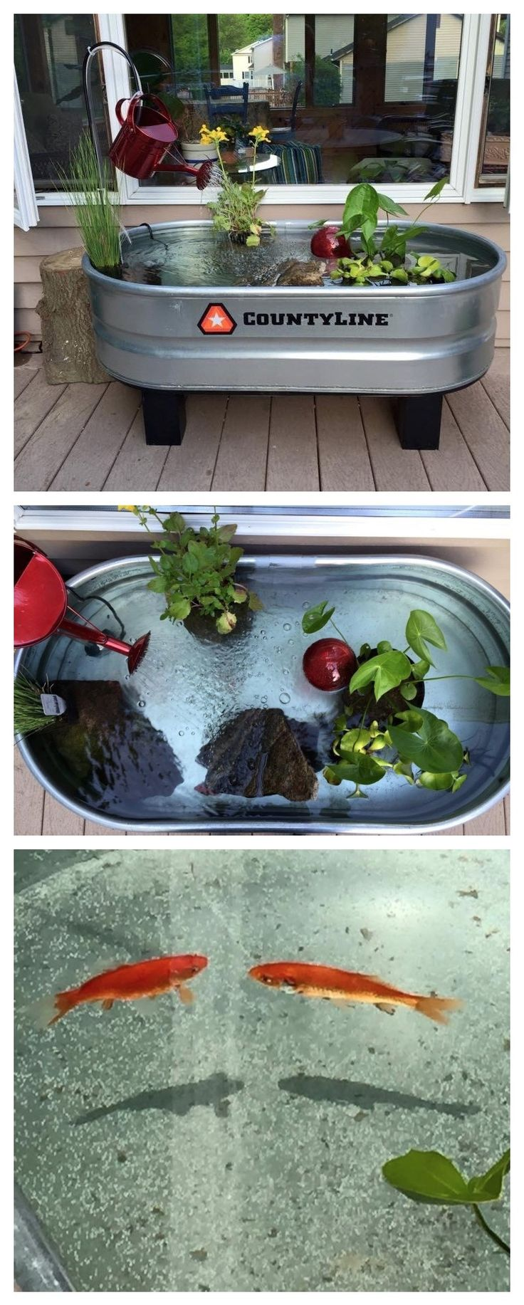 Goldfish pond species decor references - Goldfish Pond Species Decor References Make Pond Out Of A Horse Trough Just Add Water Download