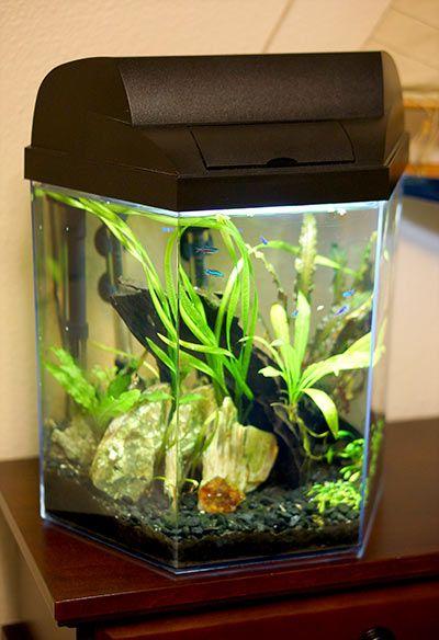 Small fish tank designs freshwater fish tanks design for 35 gallon fish tank
