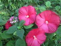 77 best images about power flower on Pinterest | Parrots ...