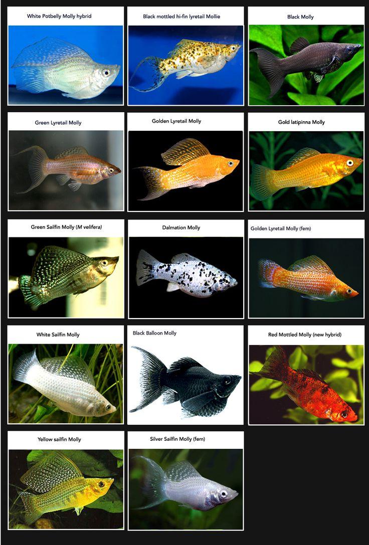 Fish aquarium identification - Fish Aquarium Identification
