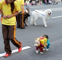 Dog Costumes Carrying A Box