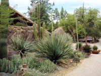 38 best images about Desert Garden on Pinterest