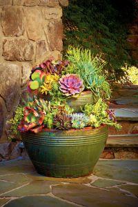 88 best images about Sedum & Succulents & Spurge on ...