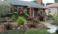 69 best images about Drought Resistant Trees on Pinterest