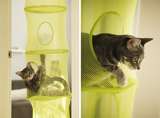 25 best ideas about cat hacks on pinterest diy cat toys
