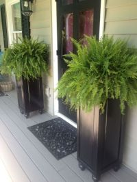 Best 25+ Tall Planters ideas on Pinterest
