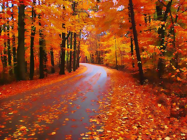 Really Cute Thanksgiving Wallpaper 162 Best Brown County Indiana Images On Pinterest